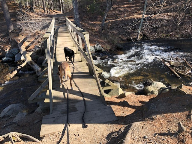 Mass Dog Hikes in Sudbury
