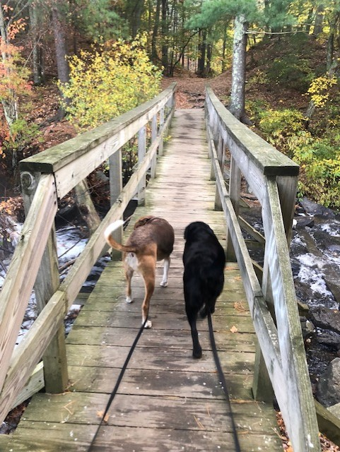 Local Dog Hiking Sudbury Dog Hikes Guide