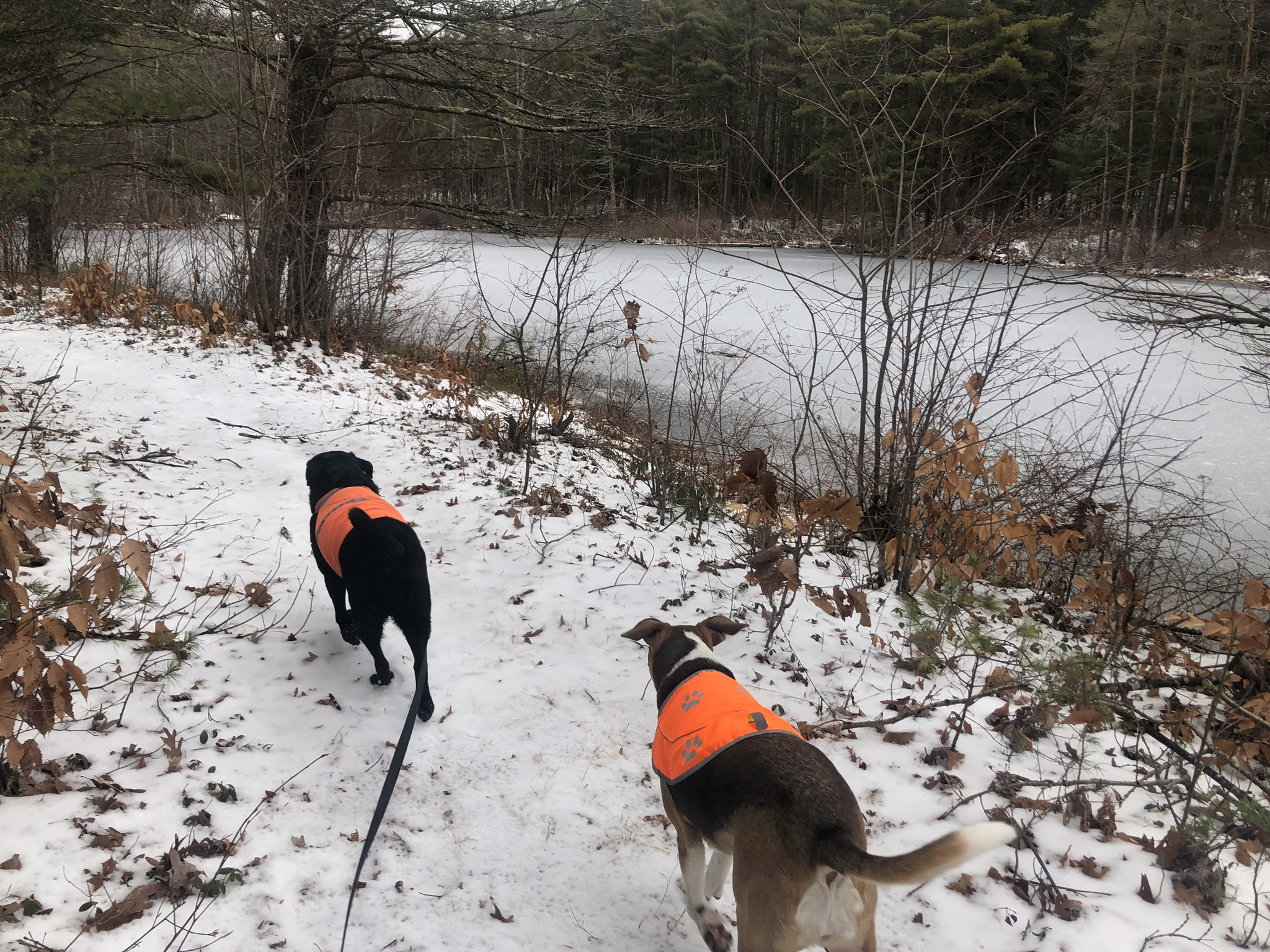Winter Dog Hiking with Mass Dog Hikes